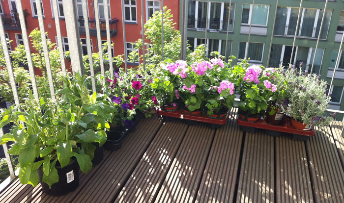 balcony garden design Archives Home Center News